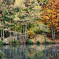 Trees In Autumn by Natalie Kinnear