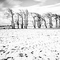 Trees In Snow Scotland Iv by John Farnan