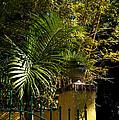 Tropical Invitation by Susanne Van Hulst