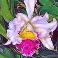 Tropical Orchid by Jane Schnetlage