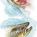 Trout Study by JQ Licensing
