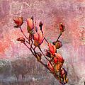 Tulip Tree Budding by J Larry Walker
