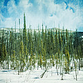 Tundra Forest by Priska Wettstein
