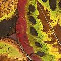 Turning Leaves 3 by Stephen Anderson