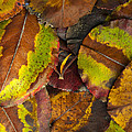 Turning Leaves 4 by Stephen Anderson