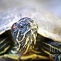 Turtle by Elena Elisseeva