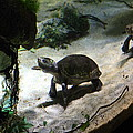 Turtle - National Aquarium In Baltimore Md - 121218 by DC Photographer