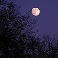 Twilight Moon by Rona Black