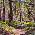 Twisp River Trail by Omaste Witkowski
