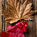 Two Leafs  by Garry Gay