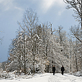 Two People Doing A Walk In Beautiful Forest In Winter by Matthias Hauser