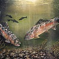 Two Rainbow Trout