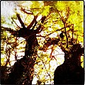 Untitled-twin Trees by Juliann Sweet