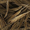 Urticating Hairs Of A Tarantula by Science Photo Library