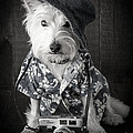 Vacation Dog With Camera And Hawaiian Shirt by Edward Fielding