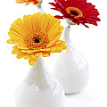 Vases with Gerbera flowers Poster by Elena Elisseeva
