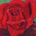 Very Red Rose by Arlene Crafton