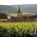 Village Of Monthelie. Burgundy. France by Bernard Jaubert