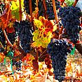 Vineyard 8 by Xueling Zou