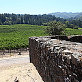 Vineyard And Winery Ruins At Historic Jack London Ranch In Glen Ellen Sonoma California 5d24537 by Wingsdomain Art and Photography