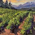 Vineyard At Dentelles by Diane McClary