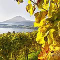 Vineyard At Lake Lucerne by George Oze