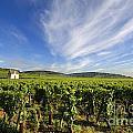 Vineyard Hut. Vineyard. Cote De Beaune. Burgundy. France. Europe by Bernard Jaubert