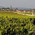 Vineyard In Front Of The Village Of Meursault. Burgundy Wine Road. Cote D'or.burgundy. France. Europ by Bernard Jaubert