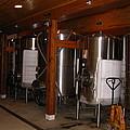 Vineyards In Va - 121263 by DC Photographer