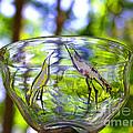 Vinsanchi Glass Art-4 by Vin Kitayama