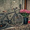 Vintage Bicycle by Dobromir Dobrinov