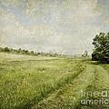 Vintage Landscape by Jelena Jovanovic