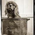 Vintage Puppy Bath by Edward Fielding
