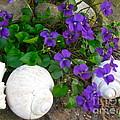 Violets And Seashells