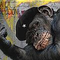 Viva La Evolucion by Joachim G Pinkawa