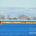Waiting For Summer - Trees At The Edge by Mary Machare