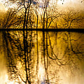 Walk Along The River by Bob Orsillo