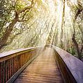 Walk With Me by Debra and Dave Vanderlaan