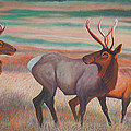 Wapiti  In Sunset Glow by Anastasia Savage Ealy