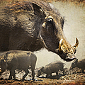 Warthog Profile by Ronel Broderick