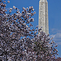 Washington Monument Poster by Susan Candelario
