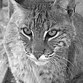 Watchful Eyes Black And White by Jennifer  King