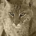 Watchful Eyes-sepia by Jennifer  King