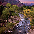 Watchman  Tower Zion Sunrise Print by Dave Dilli