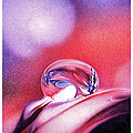 Water Drop by Natasha Denger