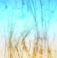 Water Grass - Outer Banks by Dan Carmichael