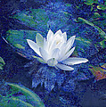 Water Lily by Ann Powell