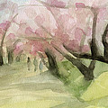 Watercolor Painting Of Cherry Blossom Trees In Central Park Nyc by Beverly Brown Prints