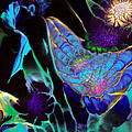 Webbed Galaxy Print by Nan Bilden