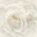 Wedding Day White Roses by Jennie Marie Schell